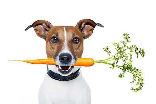 alimentação natural para pets